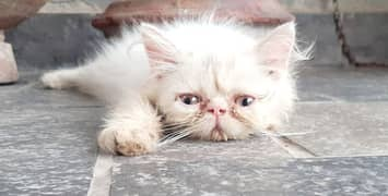 male  kitten for booking 0